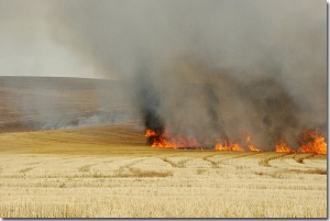 Rathdrum Prairie field burning circa 2005